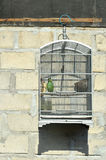 Bird in a cage Royalty Free Stock Photo