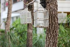 Bird cage Royalty Free Stock Photo