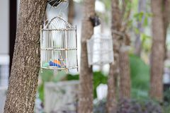 Bird cage Royalty Free Stock Photography