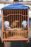 Bird cage with a small bird at the birds market in Shanghai Stock Photography