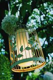 Bird cage with spring blossom and fruit flowers Wedding decorations with copy space Stock Images