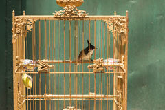 Bird in the cage Royalty Free Stock Images