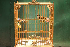 Bird in the cage Stock Photography