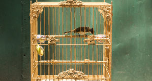Bird in the cage Stock Photo