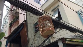 Bird in cage. At the telephone cables in Ho Chi Minh city