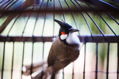 The bird in a cage. The bird with the tuft and sharp beak in a cage Stock Photos