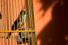 Bird in cage. Bird waiting for freedom in cage Royalty Free Stock Image