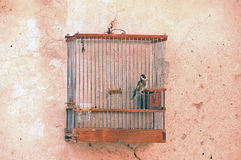 Bird in the cage. On the wall photo Royalty Free Stock Image