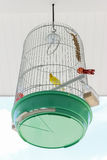 Bird cage with yellow bird inside. Decoration of food shop in Thailand Stock Images