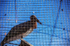 The bird in the cage Stock Images