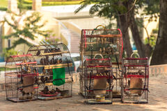Bird cages full of small birds for sale in the shade. 5 bird cages full of small birds for sale in the shade near a temple in Cambodia stock photos