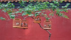 Bird cages with songbirds hang on a tree in a Chinese park royalty free stock images
