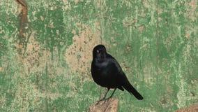 Bird, California, United States stock video footage