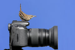 Bird On A Camera Stock Photography