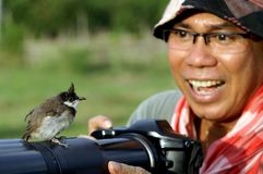 Bird on camera photographer Stock Image