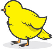Bird Canary Chubby Stock Photography