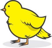 Bird Canary Chubby. Isolated chubby yellow canary bird Stock Photography