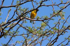 A bird captured in Namibia stock images