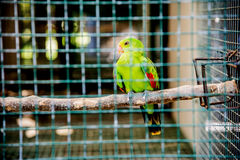 Bird in case Royalty Free Stock Photography