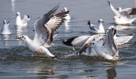 Bird catching fish stock photography