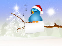 Bird celebrate Christmas Stock Photography