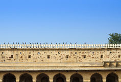 Bird at Chand Baori Stepwell in Jaipur Royalty Free Stock Photos
