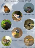 Bird chart for children Stock Image