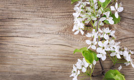 Bird Cherry Blossom on old wooden Royalty Free Stock Images