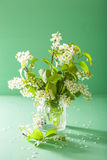Bird-cherry blossom in vase over green background Stock Photography