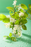 Bird-cherry blossom in vase over green background Stock Images
