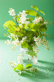 Bird-cherry blossom in vase over green background Stock Photos