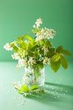 Bird-cherry blossom in vase over green background Stock Image