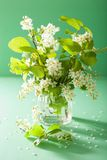 Bird-cherry blossom in vase over green background Royalty Free Stock Photography