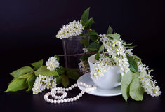 Bird cherry blossoms and pearl necklace on black background Royalty Free Stock Photo