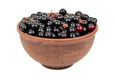 Bird cherry in bowl. Fresh bird cherry in bowl isolated on white background Stock Photos