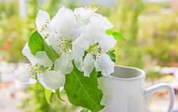Bird cherry branch in a jug. On the window Royalty Free Stock Images