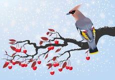 Bird on cherry branch Royalty Free Stock Photo
