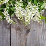 Bird cherry branch on a wooden surface Stock Photos