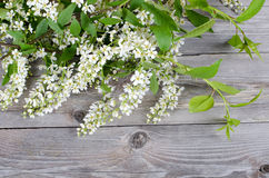 Bird cherry branch on wooden surface Royalty Free Stock Photos