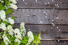 Bird cherry branch on wooden surface Stock Image