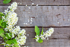 Bird cherry branch on wooden surface Royalty Free Stock Photography
