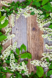 Bird cherry branches  on aged boards Royalty Free Stock Photo