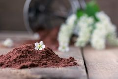 Bird cherry flour with sifter on wooden table. Bird cherry flour on old wooden table with bird cherry blossoms Stock Photos