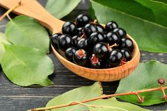 Bird cherry in spoon Royalty Free Stock Images