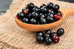 Bird cherry in spoon. Tasty bird cherry in spoon on sackcloth close up Royalty Free Stock Image