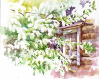 Bird cherry tree outside the window. Watercolor Stock Image