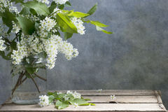 Bird-cherry tree. On rustic style background. Coated colored texture stock image