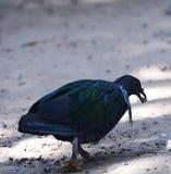 Bird chicken Blue Stock Photo