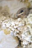 Bird chicks Stock Image