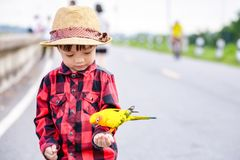 Bird on children hand in the park. royalty free stock photography